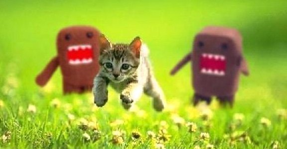 Funny cats #128. Kitten escaping from the scary aliens.