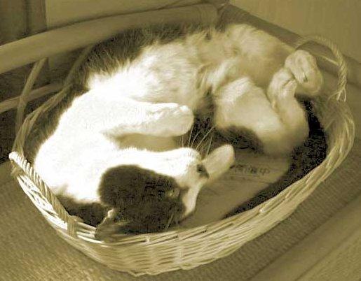 Photo of a cute cat in a basket.