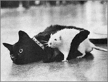 Slikice :) - Page 2 Cat-Rat-Love