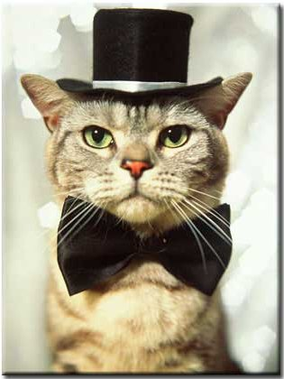cat in hat hat images. a bow tie and top hat.