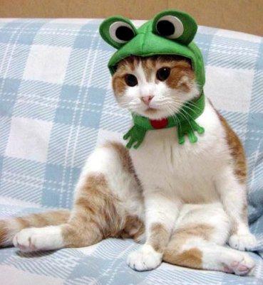 عجب گربه ای !