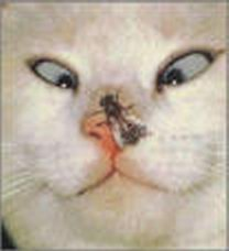 CatInsect.jpg