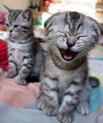 Cat laughing at SwapMeetDave lawyer jokes page.