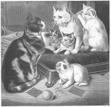 1800's drawing of cats and kittens.