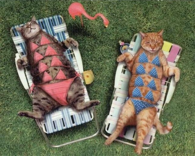Modest cats sunbathing.