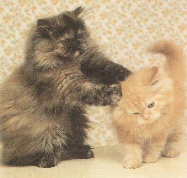 """Obrázek """"http://www.swapmeetdave.com/Humor/Cats/Playful.jpg"""" nelze zobrazit, protože obsahuje chyby."""