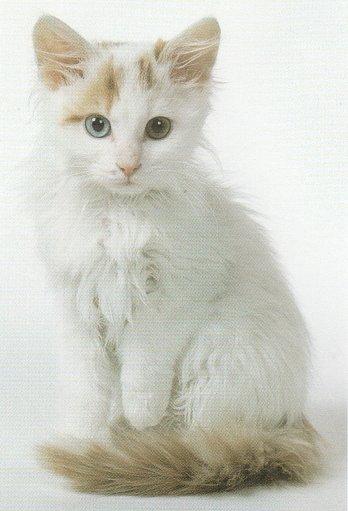 Funny cats #116. Turki...