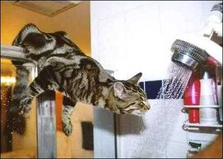 Cats usually drink water because they're thirsty. If your cat has suddenly developed excessive thirst and is drinking a lot more water than view more.