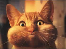 Blow cat Cat 257B